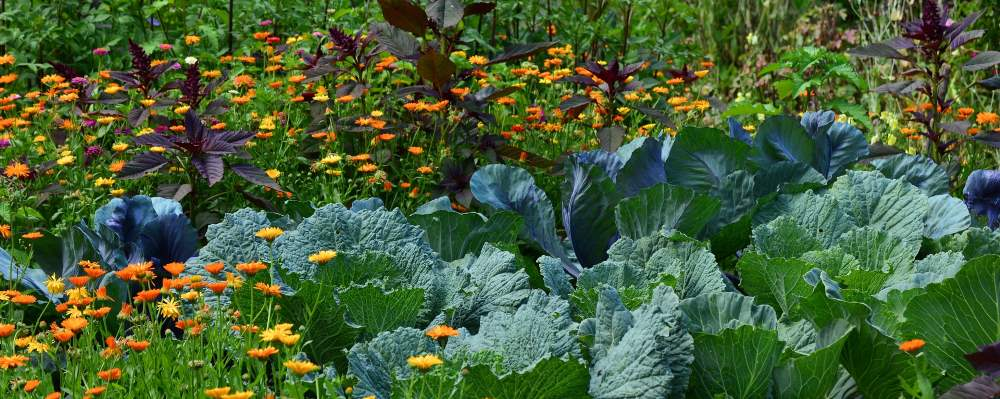 How to start a successful vegetable garden