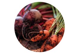 Homegrown beetroots and carrots