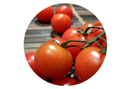 Fresh vine ripe tomatoes