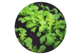 Blog - growing strong seedlings