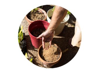 Adding bokashi bran directly to the soil