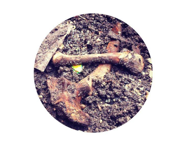 Bones composted in a bokashi bucket
