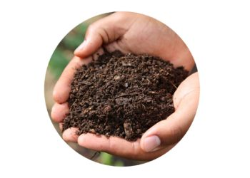 Healthy compost cupped in hands