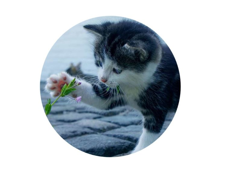 Kitten playing with flower