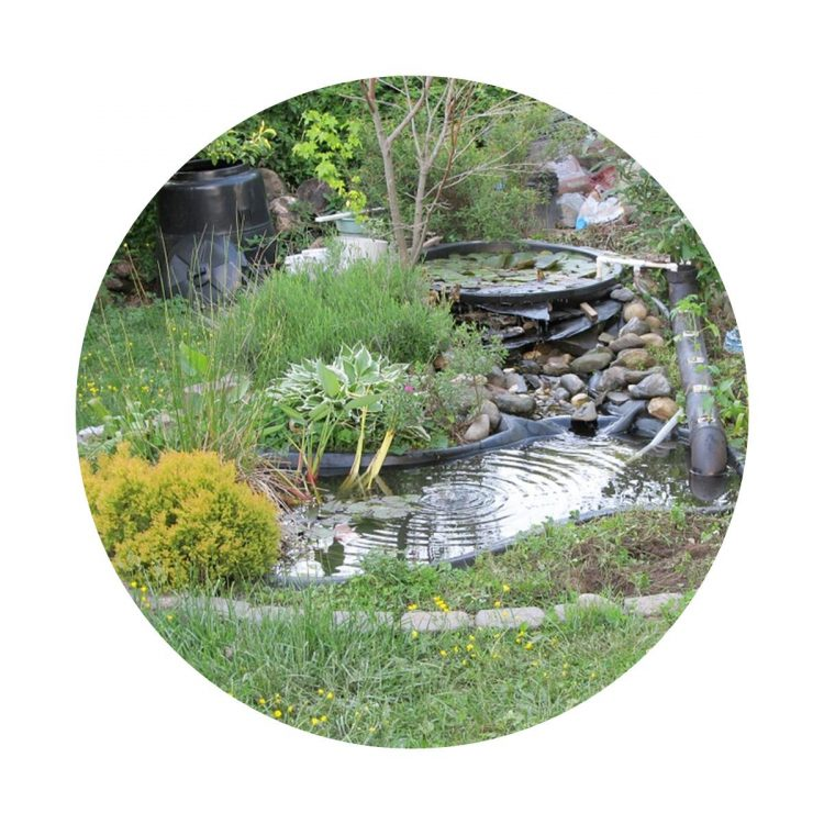 Benefits of adding a pond to your garden